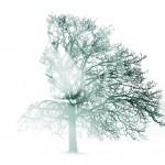 tree2-4700352_1920